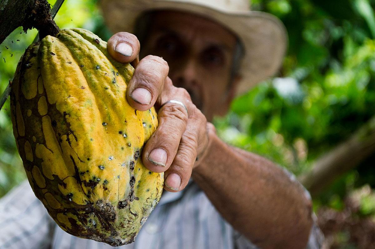 Какао Венесуэлы, Туры в Венесуэлу