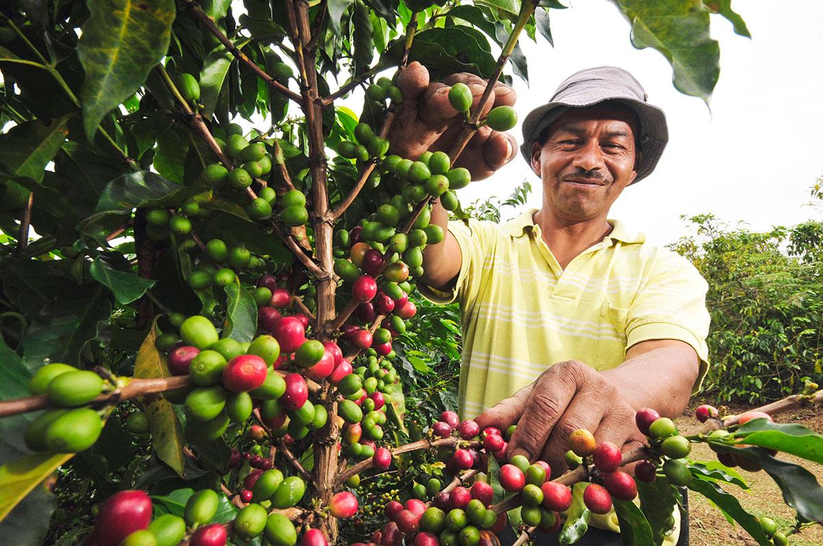 Кофе Венесуэлы, Туры в Венесуэлу