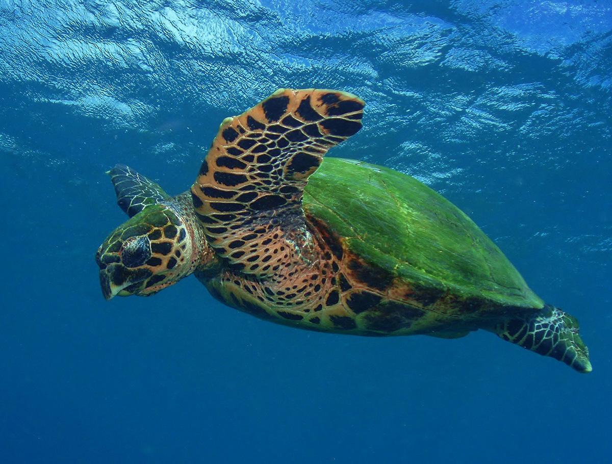 Черепахи Карибского моря, Туры в Панаму