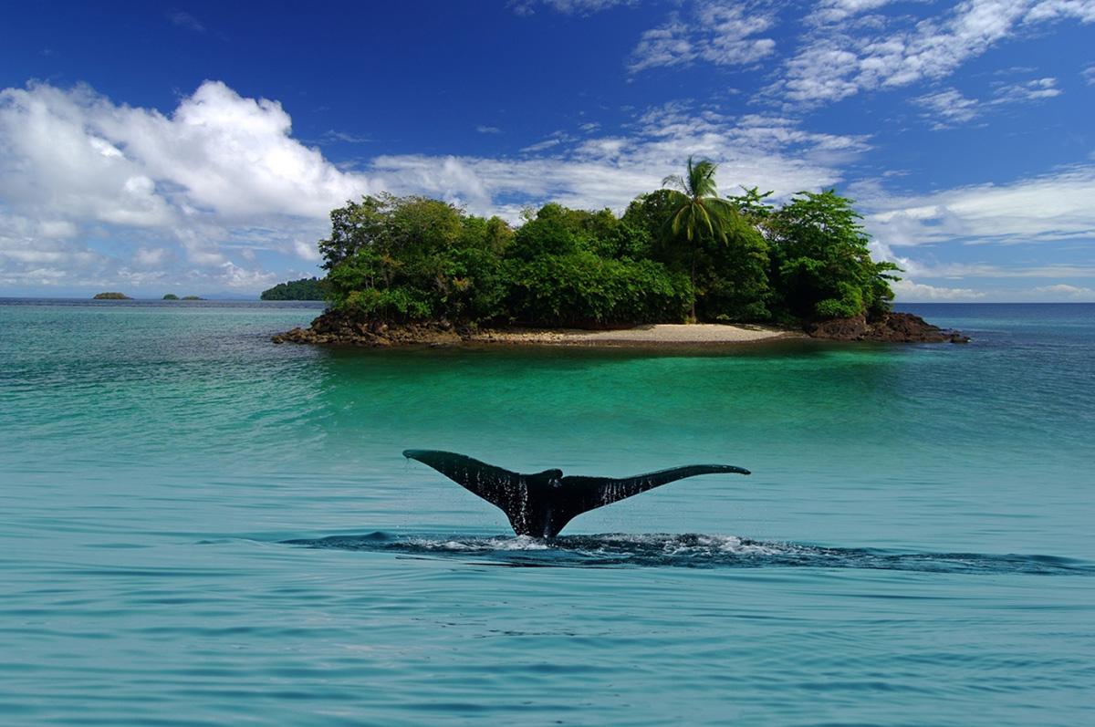 Остров Койба, Туры в Панаму
