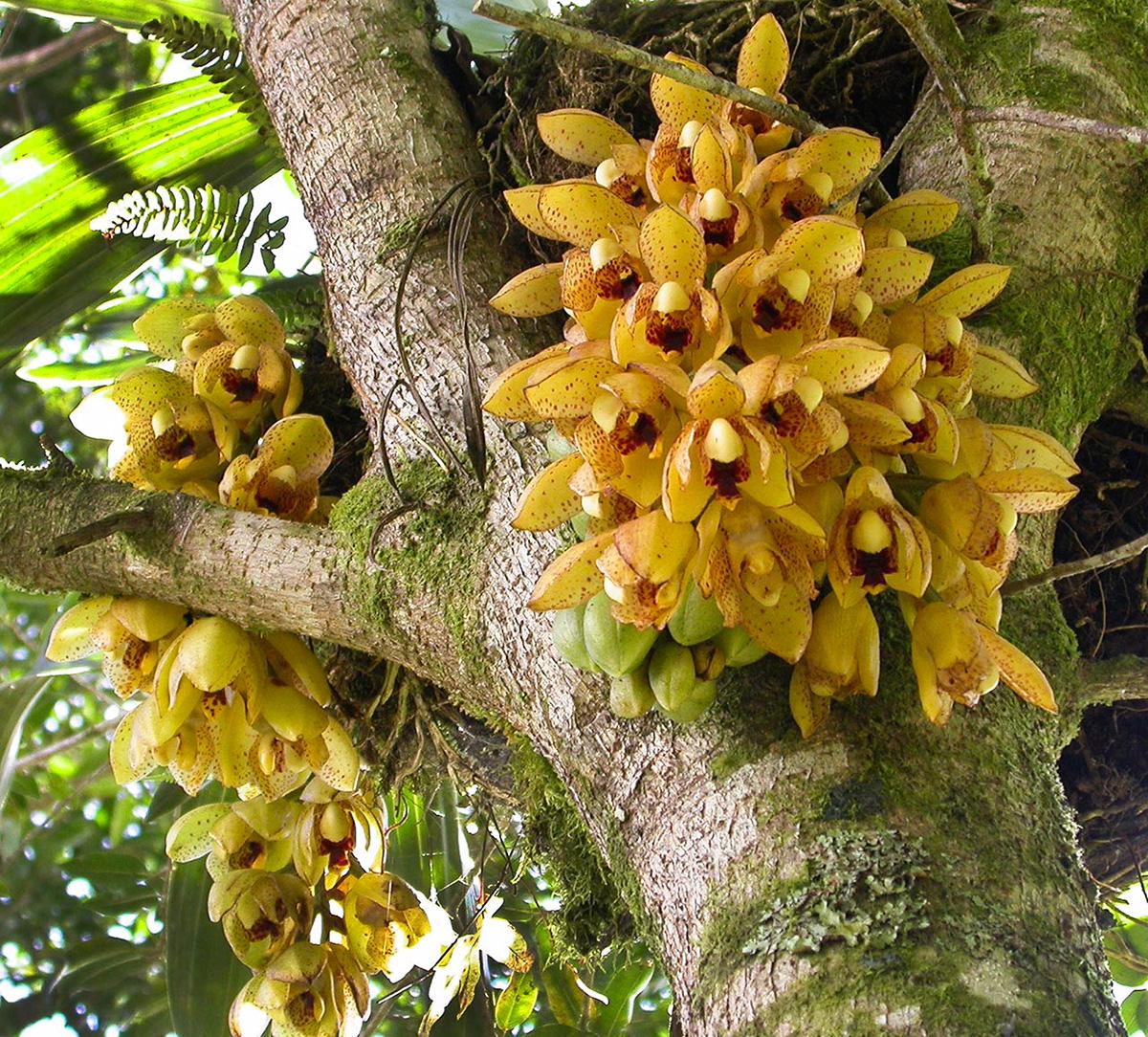 Орхидеи Панамы, Туры в Панаму