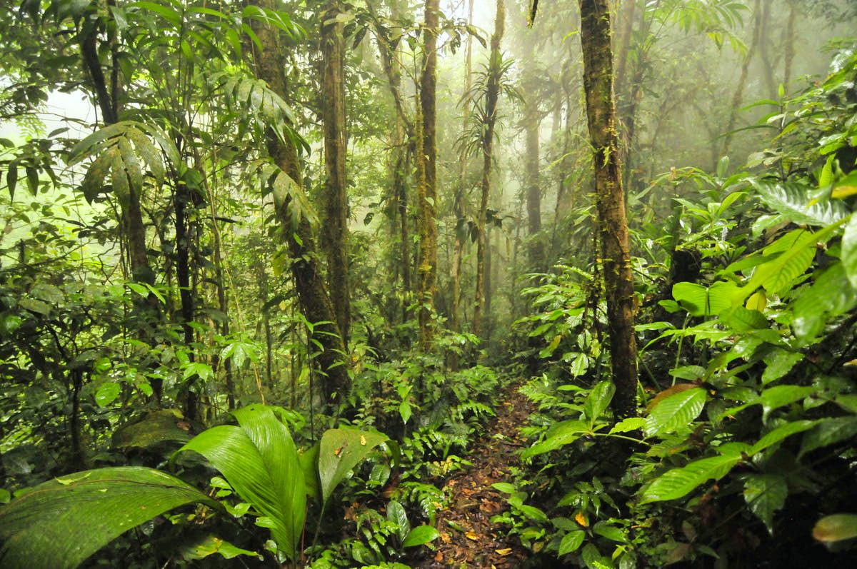 Животный мир Панамы, Туры в Панаму