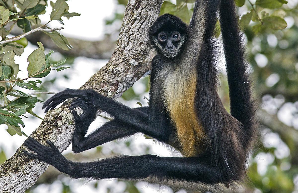 Животный мир Центральной Америки, Туры в Панаму